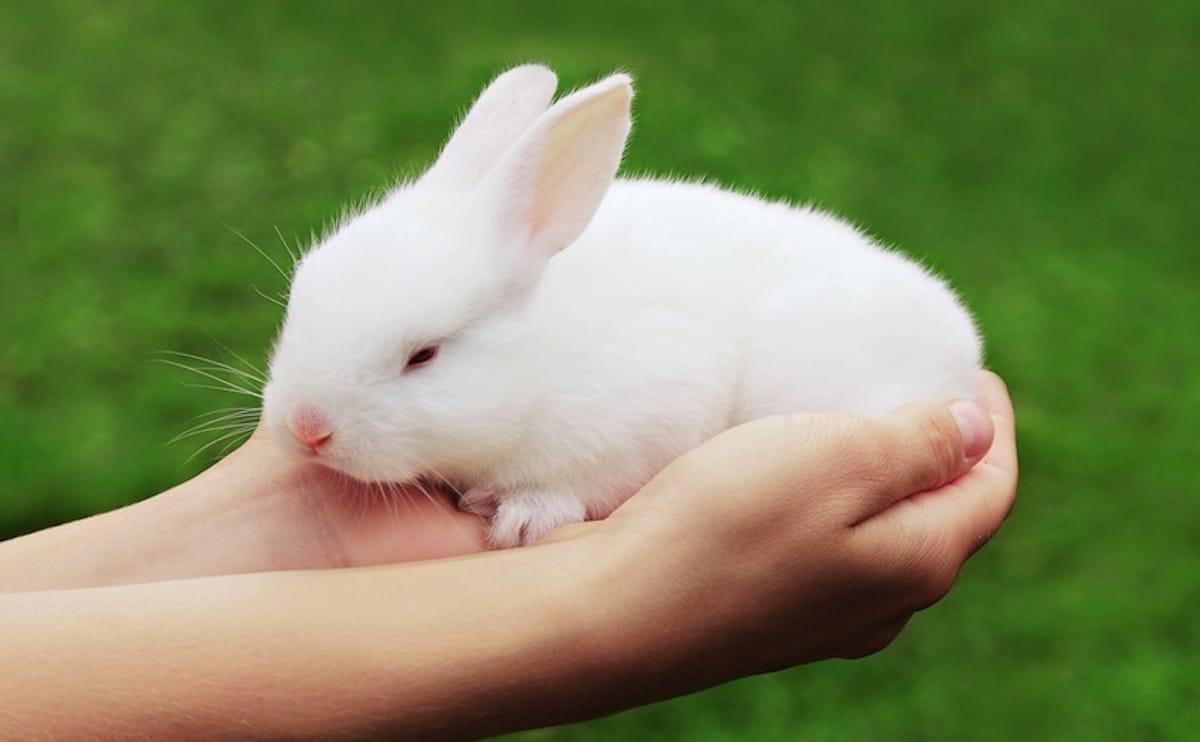 cosmetici cruelty free