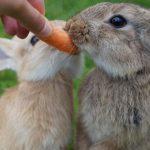 Cosmetici Vegan - anche ClioMakeUp è per il cruelty-free