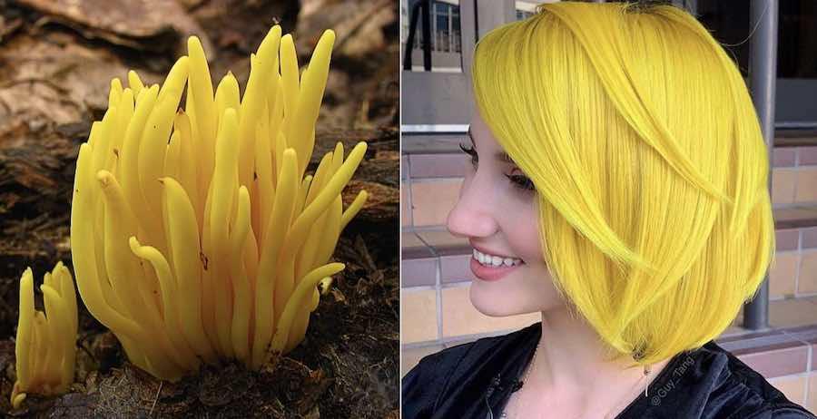 Colore capelli 2019 giallo corallo